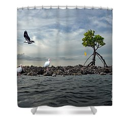 Shower Curtain featuring the photograph Everglade Scene by Dan Friend