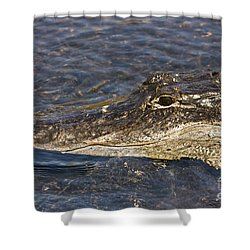 Everglades Gator Shower Curtain