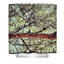 Shower Curtain featuring the photograph Evergreen Bird by Tara Potts
