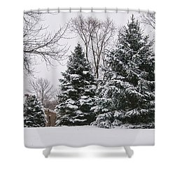 Evergreens In The Snow Shower Curtain