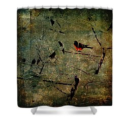 Everspring Shower Curtain