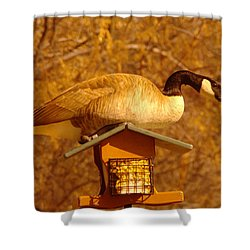 Everything Was Fine At The Bird Cafe Til Gordon The Goose Made A Pig Out Of Himself Shower Curtain by Jeff Swan