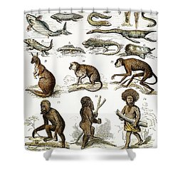 Evolution Chart Shower Curtain by Granger
