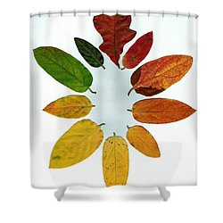 Shower Curtain featuring the digital art Evolution Of Autumn Wh by Pete Trenholm