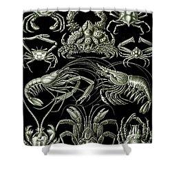 Examples Of Decapoda Kunstformen Der Natur Shower Curtain by Ernst Haeckel