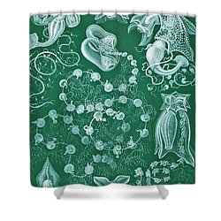 Examples Of Siphonophorae Shower Curtain by Ernst Haeckel