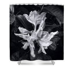 Exbury Azalea In Black And White Shower Curtain by Louise Kumpf