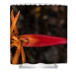 Shower Curtain featuring the photograph Exotic Heliconia by Steven Sparks