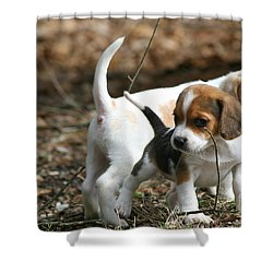 Exploring Beagle Pups Shower Curtain