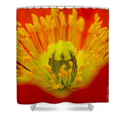 Explosion Of Colour Shower Curtain by Carole Lloyd