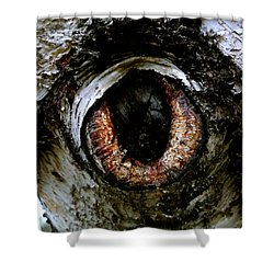 Eye In The Tree 1 Shower Curtain by Jacqueline Athmann