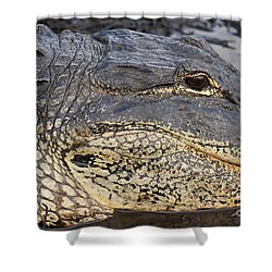 Eye Of The Gator Shower Curtain by Adam Jewell
