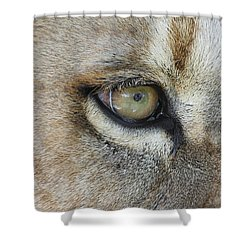 Shower Curtain featuring the photograph Eye Of The Lion by Judy Whitton