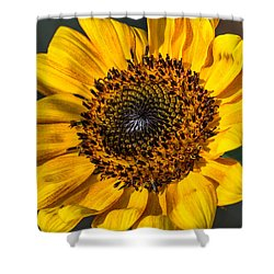 Eye Of The Sun Shower Curtain by Michael Moriarty