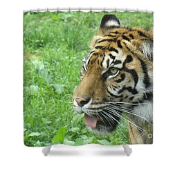 Shower Curtain featuring the photograph Eye Of The Tiger by Lingfai Leung