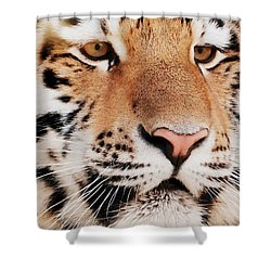 Eye Of The Tiger Shower Curtain by Ramona Johnston