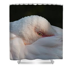 Eye On You Shower Curtain by Judy Whitton