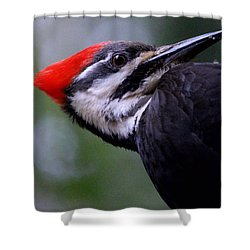 Eye To Eye With Big Woody Shower Curtain