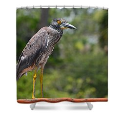 Shower Curtain featuring the photograph Eye To Lens by DigiArt Diaries by Vicky B Fuller