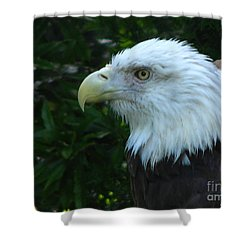 Shower Curtain featuring the photograph Eyecon by Greg Patzer