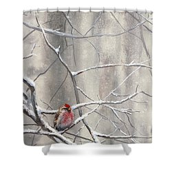 Eyeing The Feeder Alaskan Redpoll In Winter Shower Curtain