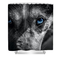 Shower Curtain featuring the photograph Eyes In The Darkness by David Morefield