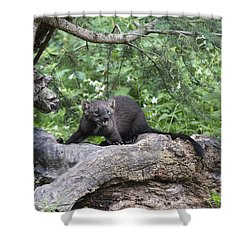 Eyes In The Forest Shower Curtain by Sandra Bronstein