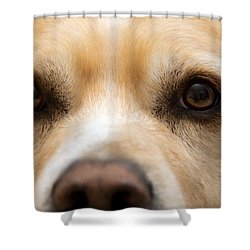 Eyes Of Friendship  Shower Curtain by Aaron Berg