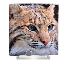 Eyes Of A Lynx Shower Curtain