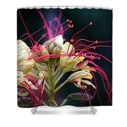 Fab Flower Shower Curtain