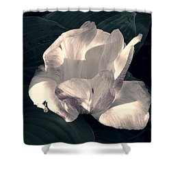 Shower Curtain featuring the photograph Faded Beauty by Photographic Arts And Design Studio