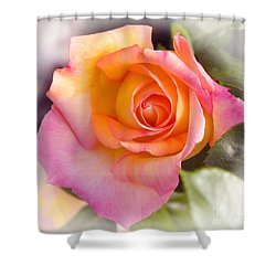Shower Curtain featuring the photograph Faded Verigated Rose by Debby Pueschel