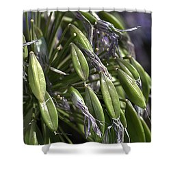 Fading Agapanthus  Shower Curtain by Joy Watson