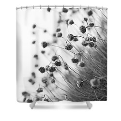 Fading Thrift Shower Curtain by Anne Gilbert