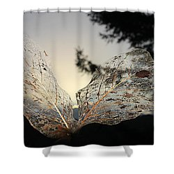 Shower Curtain featuring the photograph Faerie Wings by Katie Wing Vigil