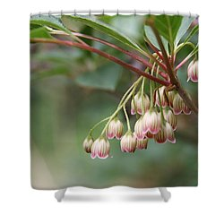 Delicate Flowers Shower Curtain