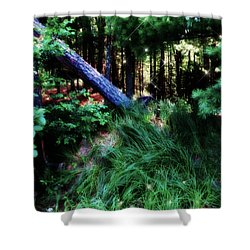 Shower Curtain featuring the photograph Fairy Forest by Jamie Lynn