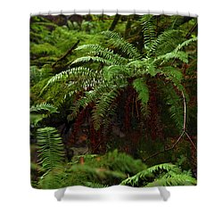 Fairy Hideaway Shower Curtain by Jeanette C Landstrom