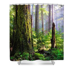 Fairy Tale Forest Shower Curtain by Inge Johnsson