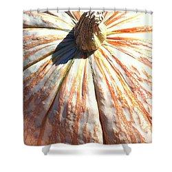 Shower Curtain featuring the photograph Fairy Tale Pumpkin by Denyse Duhaime