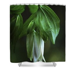 Shower Curtain featuring the photograph Fairybells Of The Forest by Betty Depee