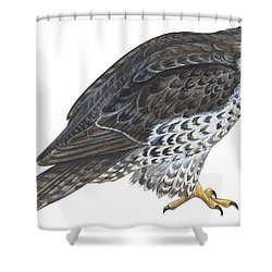 Falcon Shower Curtain by Anonymous
