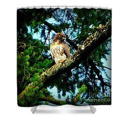 Falcon High Shower Curtain by Susan Garren