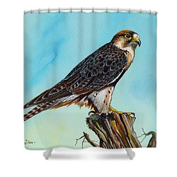 Shower Curtain featuring the painting Falcon On Stump by Anthony Mwangi