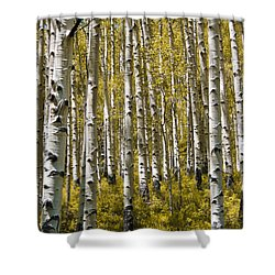 Fall Aspens Shower Curtain by Adam Romanowicz