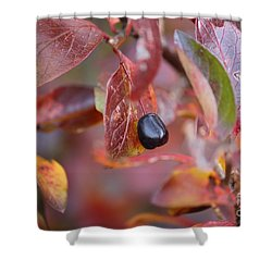 Shower Curtain featuring the photograph Fall Berry by Ann E Robson