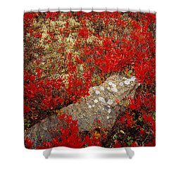 Fall Blueberries And Moss Shower Curtain