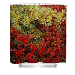 Fall Blueberries And Pine Shower Curtain