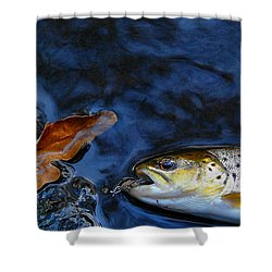Fall Brown Trout Shower Curtain by Thomas Young