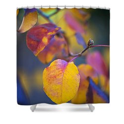 Fall Color Shower Curtain by Stephen Anderson